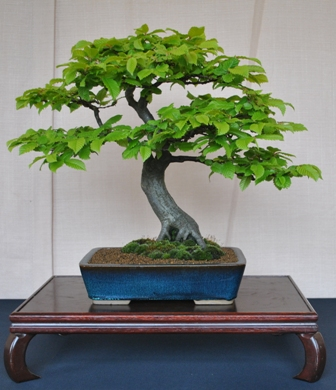 Middlesex Bonsai Society